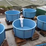 GRP Tanking circular aqua cultural